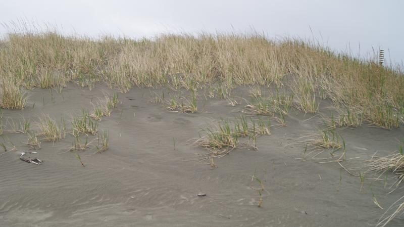 Sand dunes at Ocean Shores - Photograph by Rianna Richards on March 15, 2014
