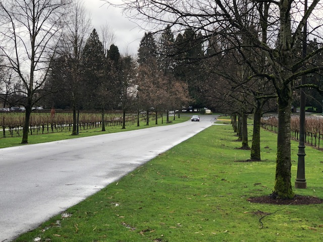 Driveway of Chateau Ste Michelle Winery. Photograph by Rianna Richards 01/28/201